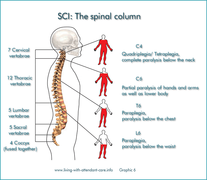 Living with attendant care spinal cord injury understanding what is the spinal cord sciox Images